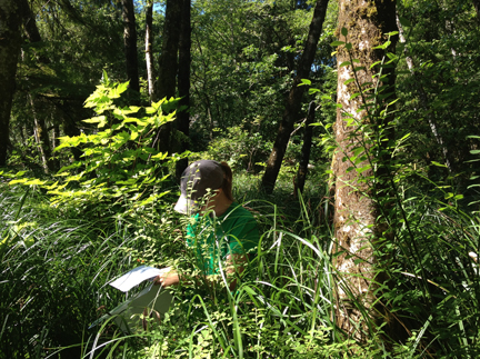 New conservation assistant Amy Hutmacher works on a site visit report at an NCLC property in Cannon Beach.