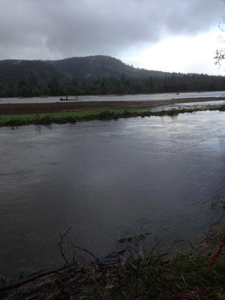 necanicum floodplain 2 web