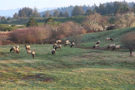 Elk-at-Reed-Ranch-web1