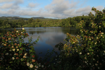 Mill-Ponds-ninebark