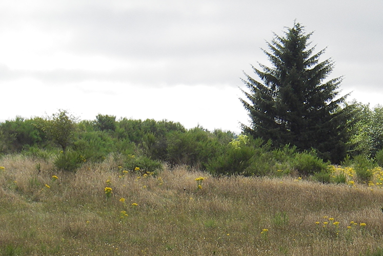 Neacoxie Estates PROP
