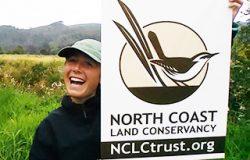 Marsh_wren_migration_NCLC_fi