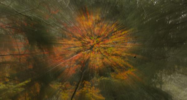 Leaves blanket the landscape, energizing the animal world
