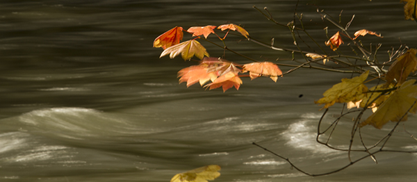 """Falling leaf """"energy packets"""" fuel the stream"""