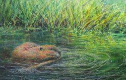 Curington_Oregon_Beaver_and_Pond_cropp