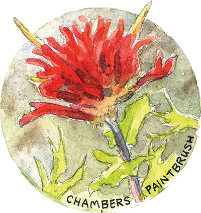 Chambers Paintbrush
