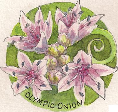 Olympic Onion